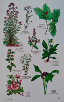 Herbs for Health: A Concise Treatise on Medicinal Herbs, Their Usefulness and Correct Combination in the Treatment of Diseases: A Guide to Health by Natural Means